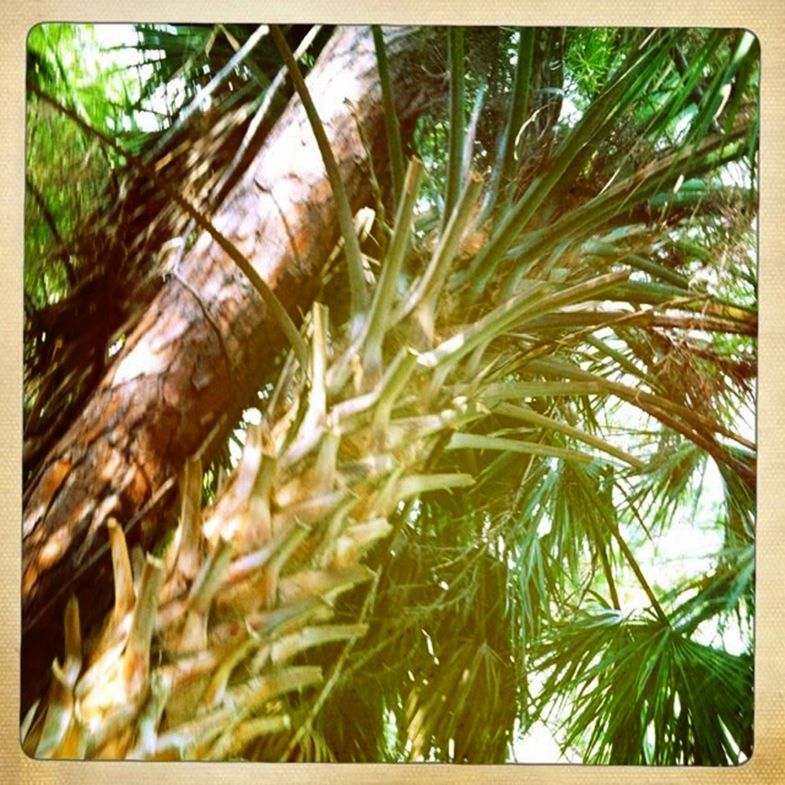 ecstatic palms3